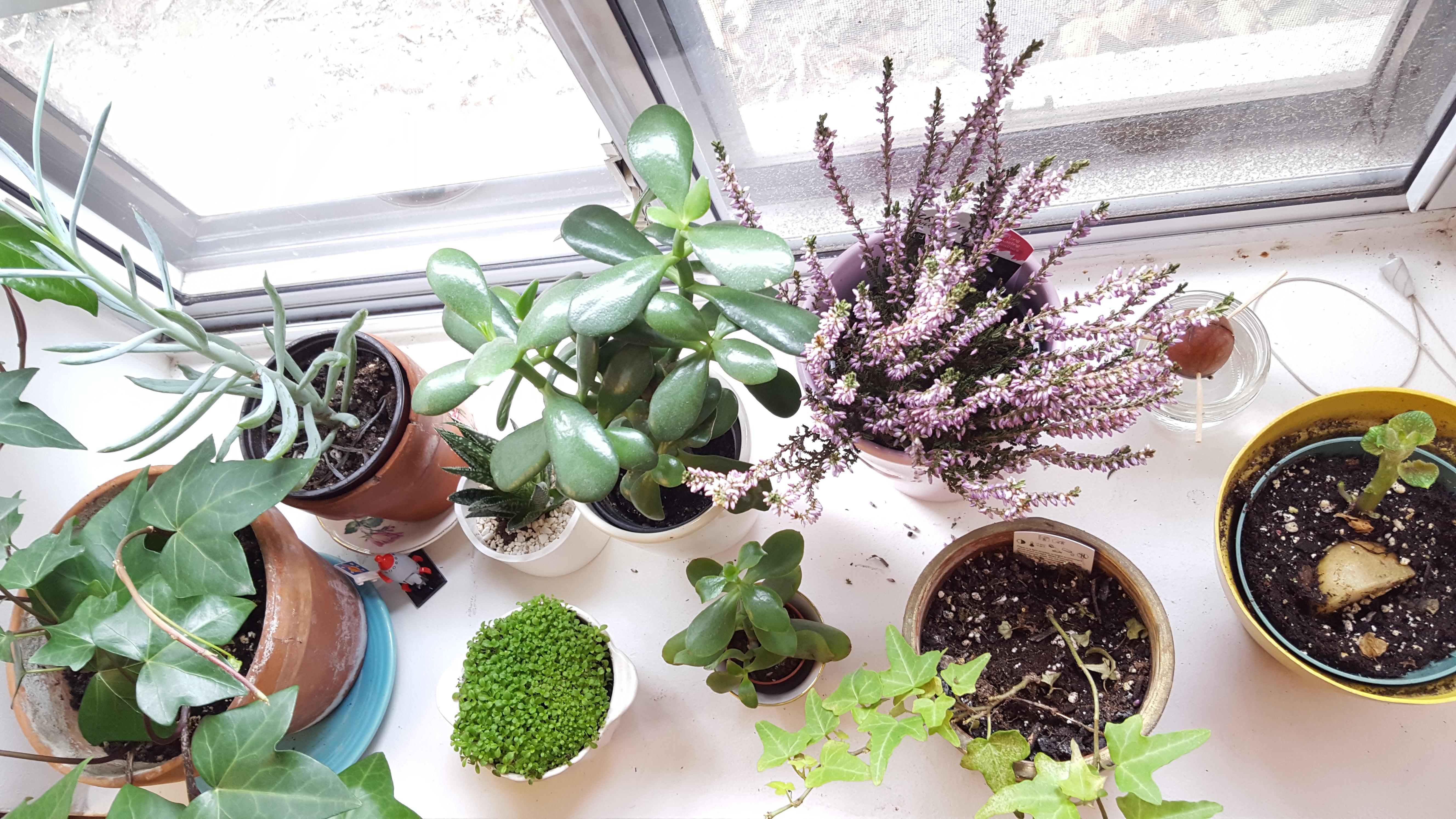 Josiah Osagie's House Plants